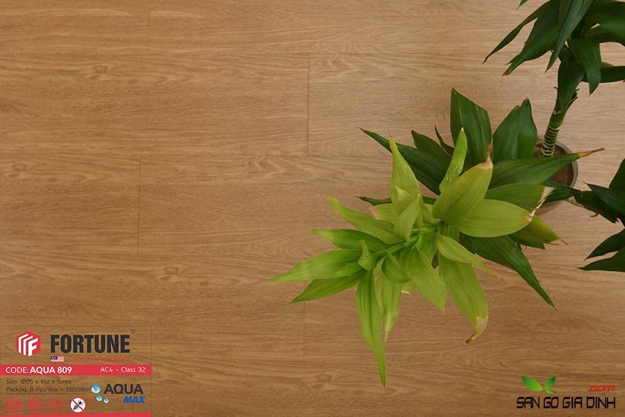 Sàn gỗ Fortune 8mm 809-3